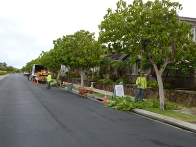 Tree Pruning in Street