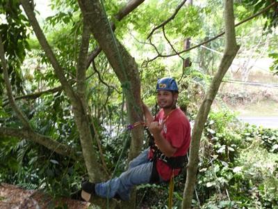 Tree Tech Climbing