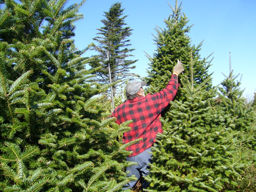Tree Care Trimming Services