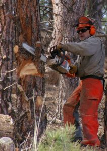 Tree Removal Tips and Services