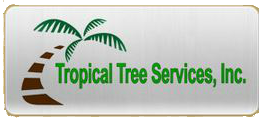 Tree Service Honolulu